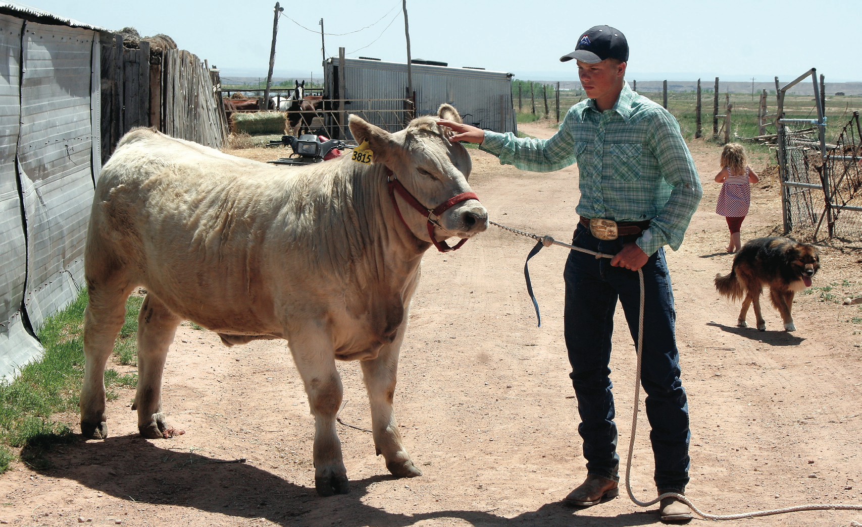 For Joe Frost working with a steer is almost second nature. While talking with the Vernal Express and his family, he gently reaches up to show how he's worked to groom his steer.